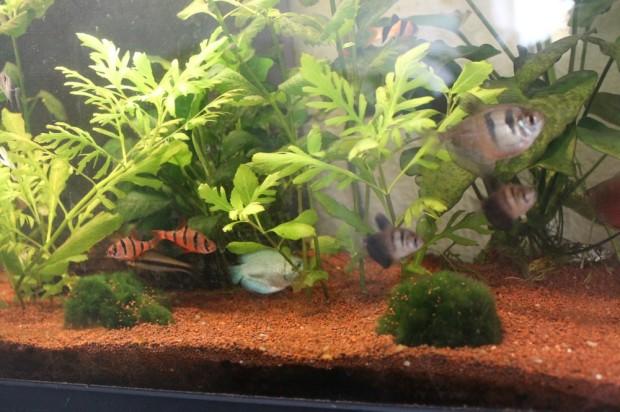 aquariuuum