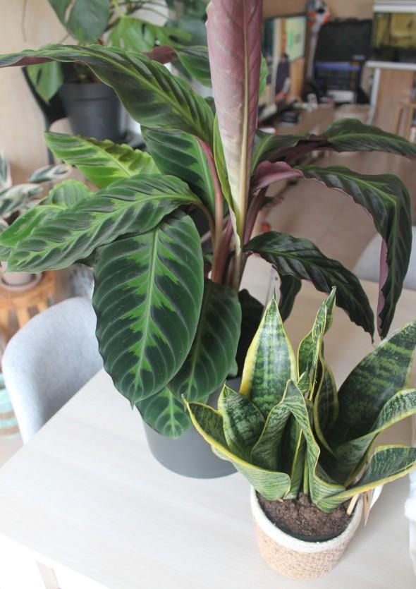 plantes cadeaux